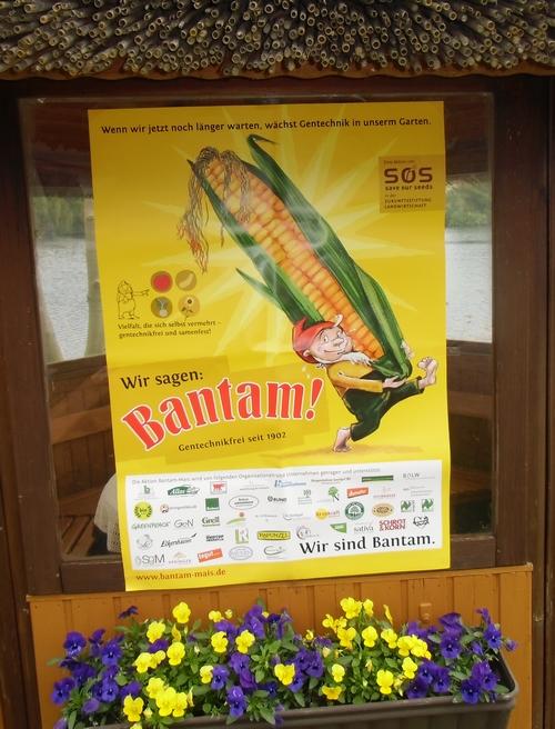 Bantam-Mais Pflanzaktion bei Sannmann-04